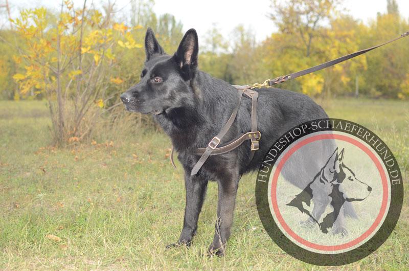 Hundegeschirr Leder für Zugarbeit