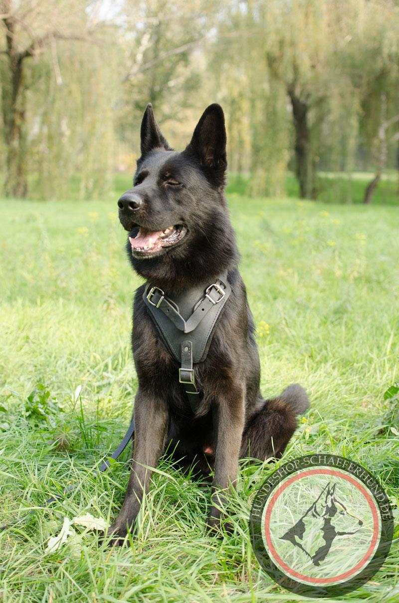 Hundegeschirr aus Leder, außergewöhnlich
