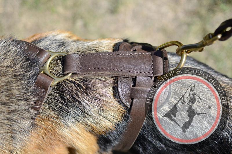 Leder Hundegeschirr, außergewöhnlich
