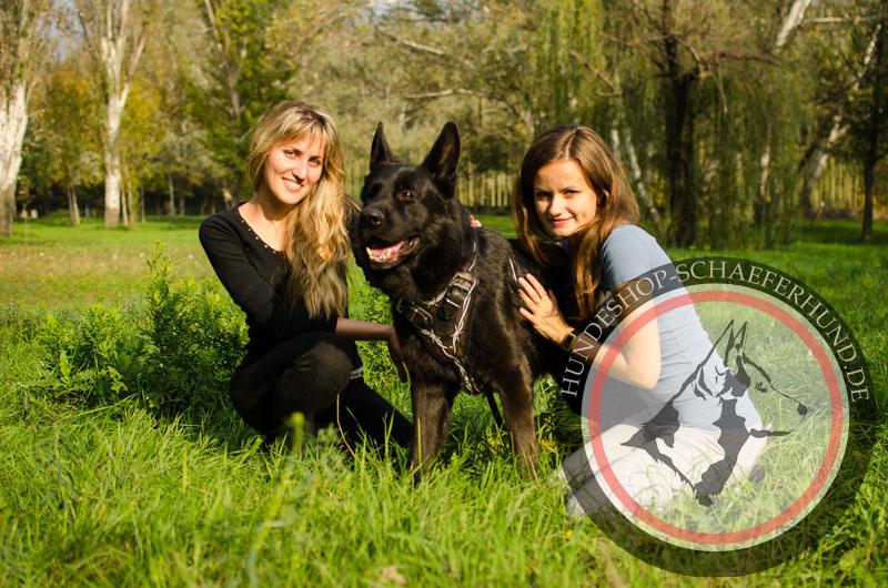 robustes Hundegeschirr Leder