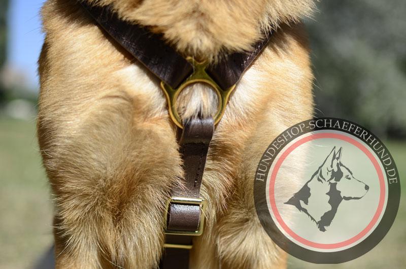 Hundegeschirr Leder, bequem