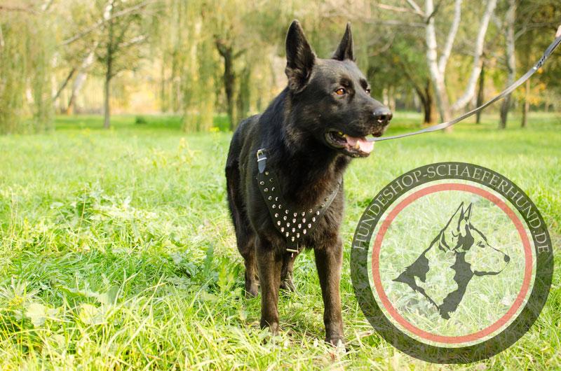 Hundegeschirr Leder, gepolstert
