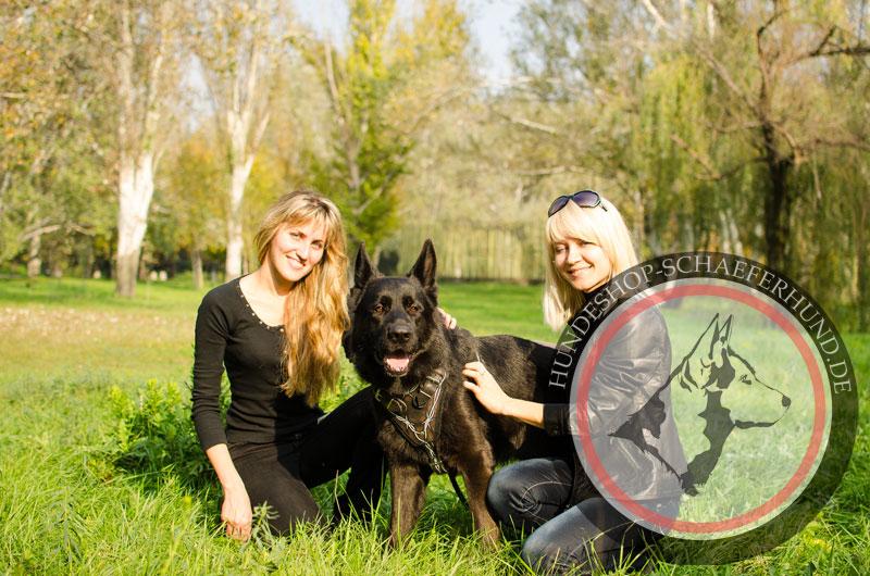 Leder Hundegeschirr, strapazierfähig