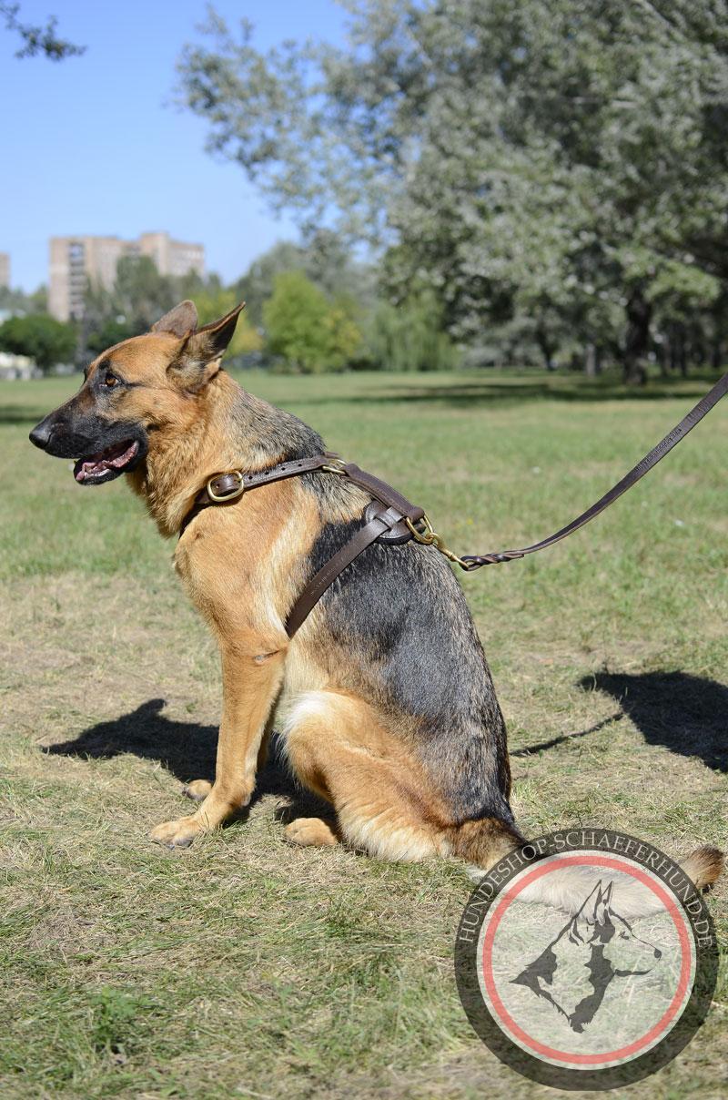 Ausgezeichnetes Leder Hundegeschirr für Schäferhund, gepolstert