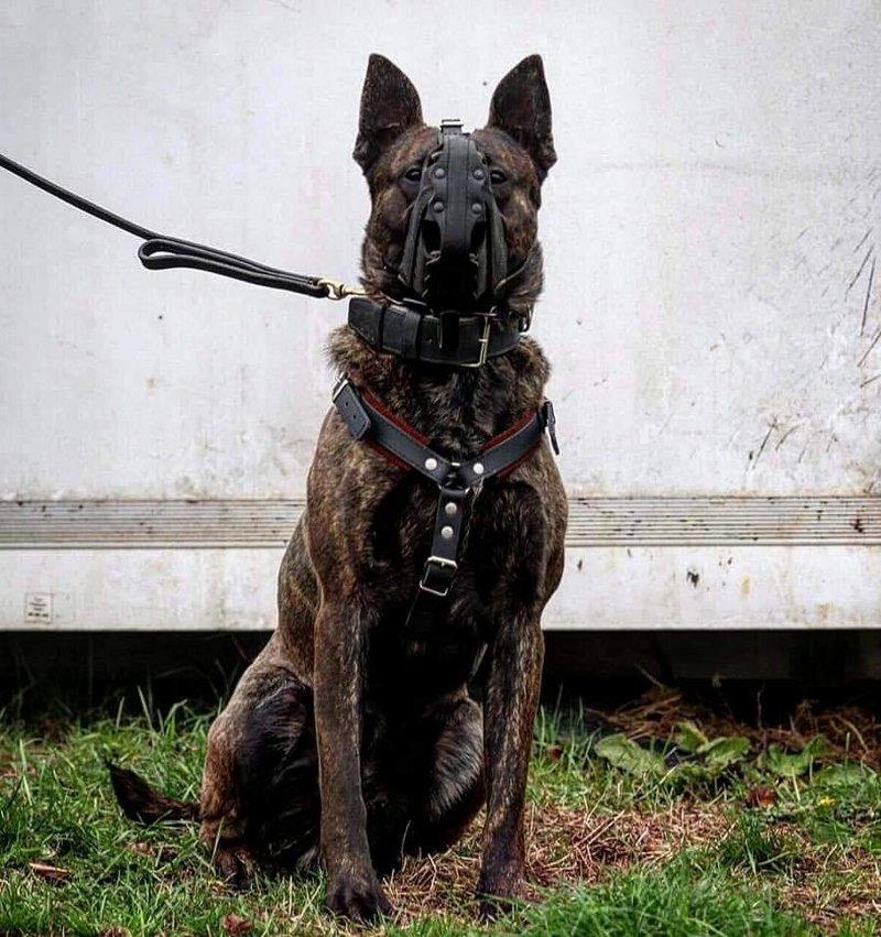 Ledermaulkorb für Hundesport